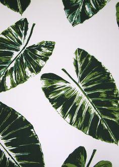 Banana Leaf Wallpaper Pattern Banana leaves rose cumming