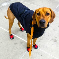10 Durable Winter Dog Boots To Protect Your Pup's Paws All Season - BarkPost