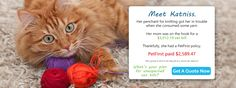 Trusted Pet Insurance for Dogs and Cats | PetFirst Pet Insurance