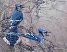 Blue Jays Bird Painting by Bird Artist Kim Diment