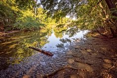 Flint Creek Island Wetlands - The beautiful shorelines and wetlands of Flint Creek Island in Wheeler National Wildlife Refuge