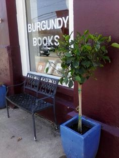 Burgundy Books in he spring