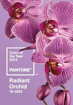 Radiant Orchid: #Pantone #Color of the Year 2014 #colour color de, de 2014, colors, year 2014, el color