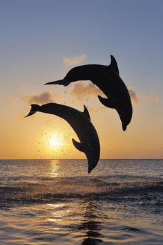 We did it, we did it - Book de Estilo - Dolphin Photos, Dolphin Art, Ocean Wallpaper, Animal Wallpaper, Beautiful Sea Creatures, Animals Beautiful, Scenery Pictures, Nature Pictures, Photo Dauphin