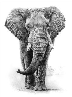 African elephant graphite pencil drawing by linda weil i wasn't this Elephant Love, Elephant Art, African Elephant, African Animals, Elephant Sketch, White Elephant, Realistic Elephant Tattoo, Elephant Tattoo Design, Elephant Tattoos