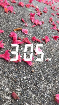 Walking to pick up my nieces from school and I remembered these flowers being like this when I used to go to the school Snapchat Time, Snapchat Posts, Snapchat Streak, Snapchat Picture, Snapchat Stories, Instagram And Snapchat, Instagram Story, Snapchat Ideas, Insta Snap