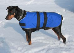 XL Winter Dog Coat size 26 - warm and extra durable - Royal Blue with reflective piping