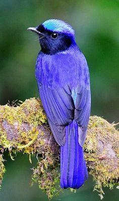 @ purple and turquoise bird
