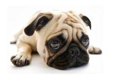 SpawPet - Ottawa's Best Pet Groomer 613-698-8038