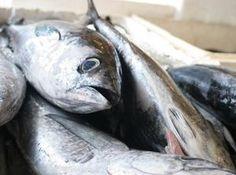Fish-emulsion