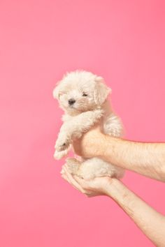 is there anything cuter than a man holding a fluffy puppy in front of a pink background!?