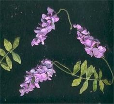 "how to: wisteria (to find tutorial, click on small photo of doll in blue dress on minipat home page, scroll right to ""techniques"", then ""special fleurs"", then ""glycine"" which is french for wisteria.)"
