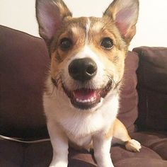 Everyone could always use more Corgi in their feed. Meet @kylorenqueen
