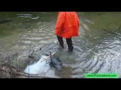 The Catch (Beavers and Muskrat) Water Trapping