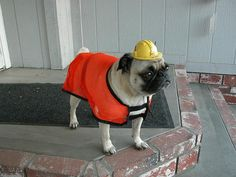 This construction pug wants to let you know to expect a lot of digging in your yard while he works on this project.