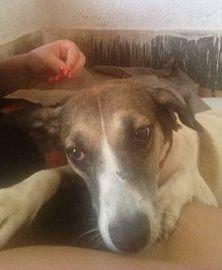 BONDE DA BARDOT: SP: Matilda sofre de tristeza em um abrigo e espera ser adotada por família amorosa!