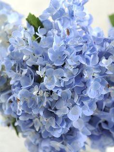 ♥  Bouquet de flores azuis