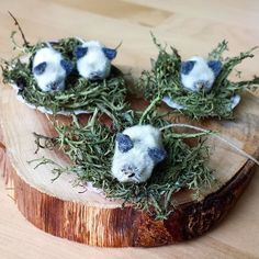 For handwork today we turned our little pussy willows into mice - with felt ears and a thread tail - they sit nestled in a moss filled shell for a nest. #apeekinsidemypreschool #waldorfpreschool #waldorfeducation #waldorf #pussywillows #pussywillow #preschoolhandwork #preschoolcraft #whatwemadeatthepreschoolthisweek #kidmade