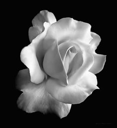 Rose Photograph - Porcelain Rose Flower Black And White by Jennie Marie Schell