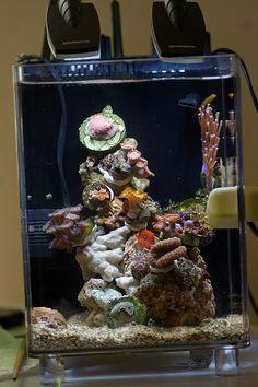 Saltwater Fish Tanks, Tropical Fish Tanks, Saltwater Aquarium, Aquarium Fish, Nano Reef Tank, Coral Reef Aquarium, Marine Tank, Home Aquarium, Coral Tank