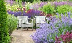 Garden Ideas Border ideas Perennial Planting Perennial combination Perennial Meadow Summer Borders J Meadow Garden, Cottage Garden Plants, Astrantia, Gravel Garden, Walled Garden, Outdoor Furniture Sets, Outdoor Decor, Salvia, Horticulture