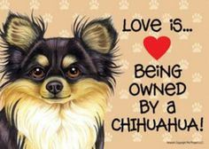 "Love my chi""s - McGee, Chew Chew and Ziva."