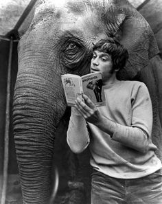 Oliver Reed reading a book about elephants to an elephant on set of Hannibal Brooks