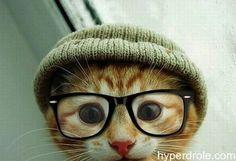chat drole trop mignon