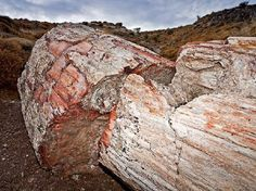 Fossile tree from the Sigri area on Lesvos, ca. years old. In February of the Petrified Forest of Lesvos was inducted into the Global Geopark Network of UNESCO. Forest Ecosystem, Extinct Animals, In Ancient Times, Geology, Greece, Island, Petrified Wood, Nature, Forests