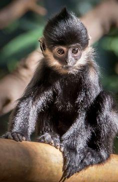 sdzoo Animals And Pets, Baby Animals, Cute Animals, Animal Babies, Animal Fun, Cute Creatures, Beautiful Creatures, Animals Beautiful, Monkey Types