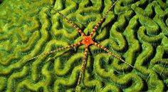 Картинки по запросу морские обитатели коралловых атоллов
