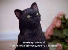 Salem Saberhagen from Sabrina the Teenage Witch Salem Sabrina, Sabrina Cat, Salem Cat, Salem Saberhagen, The Awkward Yeti, Sabrina Spellman, Intp, Film Quotes, Humor Quotes