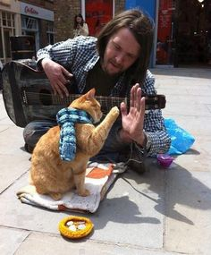 I love how there is the knit/crochet work in this pic, just as much as I love the man high-fiving the cat!