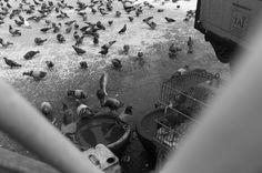 Pigeon love...