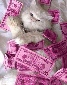 #rich#rich