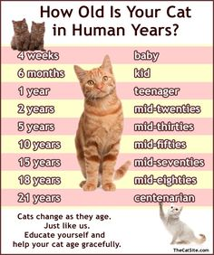 ネコ年齢、人間にすると何歳?