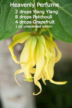 Heavenly.  New to essential oils? Get a FREE 14 day Essential oils 101 E-Course, download and free virtual essential oils class here: http://www.greenthickies.com/free  Get started with Young Living essential oils here: http://www.greenthickies.com/oils