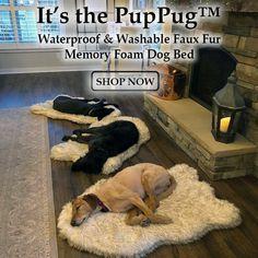 One part bed, one part rug, the PupRug™ combines comfort and style so you don't have to choose between a beautiful home and a happy dog. Our dog beds are machine-washable and waterproof too! Baby Animals, Cute Animals, Orthopedic Dog Bed, Dog Rooms, Memory Foam, Pet Beds, Dogs And Puppies, Bulldog Puppies, Doggies