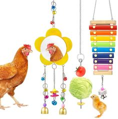 alued Chicken Coop Accessories Kit: Package include 1 x Chicken Xylophone Toys, 1 x Chicken Mirror Toys, 1 x Vegetable Hanging Feeder. This kit is a good helper to relieve chicken's boredom and pressure Chicken Music Toys: Chicken Xylophone base is made of wood, key made by metal. Premium design for chicken entertainment, chicken xylophone toy has metal keys and bells, will make sound when chicken peck it
