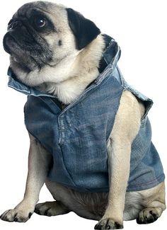 clever jean dog jacket  :)