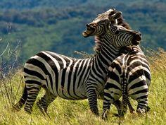 Explore Serengeti National Park, Tanzania (UNESCO site) - TripBucket
