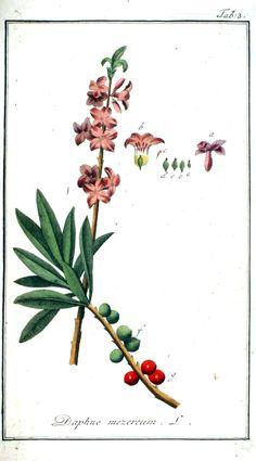 Plantaardigheden.nl - Leeswerk.nl Plaat en beschrijving scans der artsenij-gewassen 1796 Deel 1