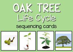 These cards can be used to show children the life cycle of an oak tree: from acorn, to seedling, to young oak tree, to full grown oak tree. These can also be added to the science center, along with the self-checking card, for children to put in order. Download: Tree Life Cycle Welcome!Would you like …
