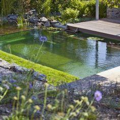 é possível sim ter uma piscina ecológica ou também chamada de piscina biológica. E o segredo são sempre as plantas! Segundo o site SustentAr...