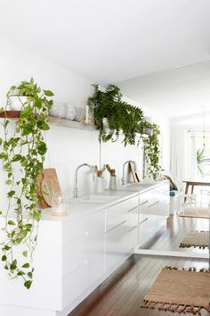 The 35 Best Patterned House Plants Images On Pinterest In 2018