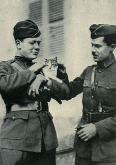 Officers of the U.S. 2nd Army Corps with a cat they discovered in the ruins of Le Cateau-Cambrésis. [Pictorial Record of the 27th Division] These Are the Brave and Fluffy Cats Who Served in World War I