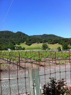 Elyse Winery in Napa, CA