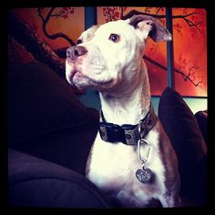 Share! AND help us show the world how wonderful pit bulls really are!