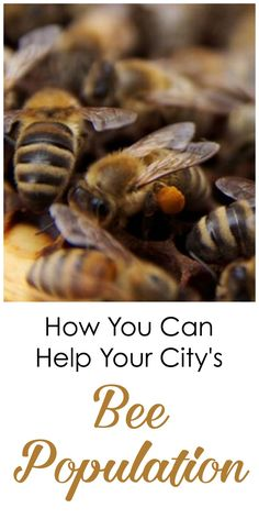A surprising reason why Vancouver's bee population is so strong and how you can help it keep growing. Sponsored.gar