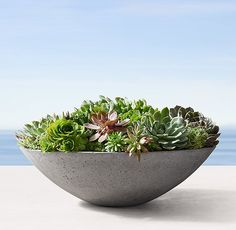 RH Modern's Andora Tapered Bowl:A simple, geometric shape and rough-hewn texture lend our bowl an earthy, elemental presence. Crafted of an eco-friendly concrete-fiberglass blend, it offers durability and weather resistance. Indoor Outdoor Rugs, Indoor Plants, Outdoor Gardens, Outdoor Planters, Outdoor Fun, Potted Plants, Types Of Succulents, Faux Succulents, Succulent Landscaping